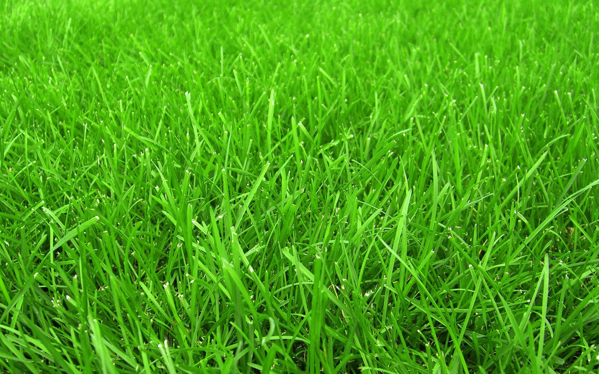 gaz1 Как сделать возле дома красивый газон самостоятельно