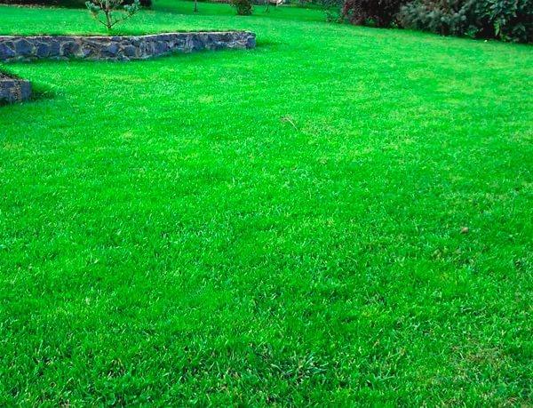 gaz2 Как сделать возле дома красивый газон самостоятельно